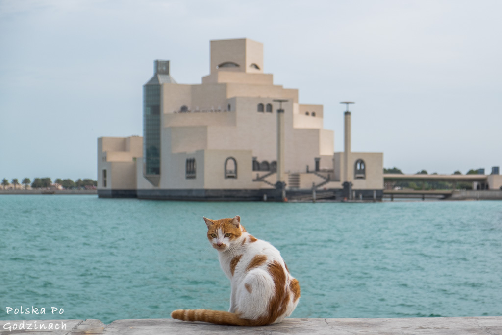 kot na tle budynku Muzeum sztuki Islamskiej w Doha