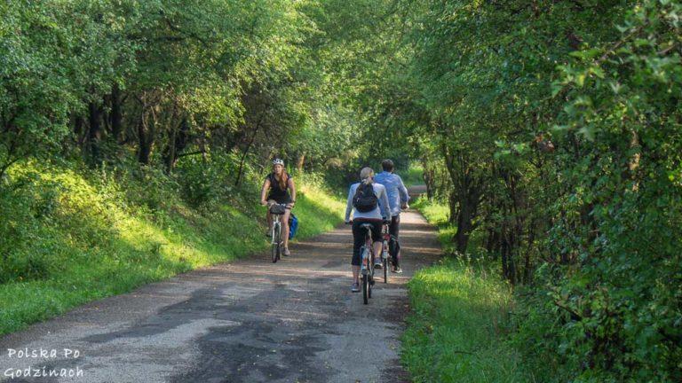 trasa rowerowa wsród drzew na Zakrzówek w Krakowie