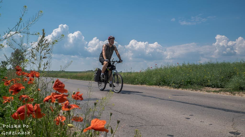 rowerzysta jadacy drogą wśród czerwonych maków