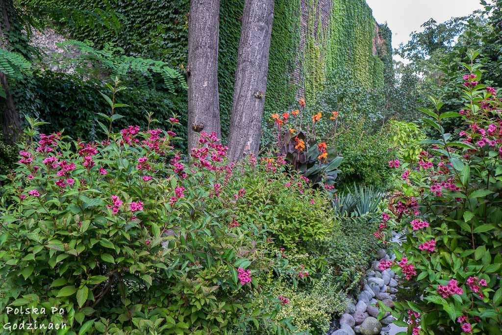 ukwiecony ogród i mur porośnięty zielonym bluszczem