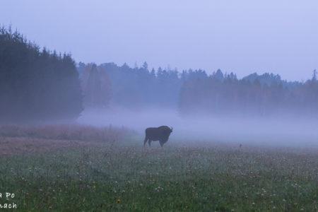 Największe atrakcje Podlaskiego. Czyli wakacje blisko natury.