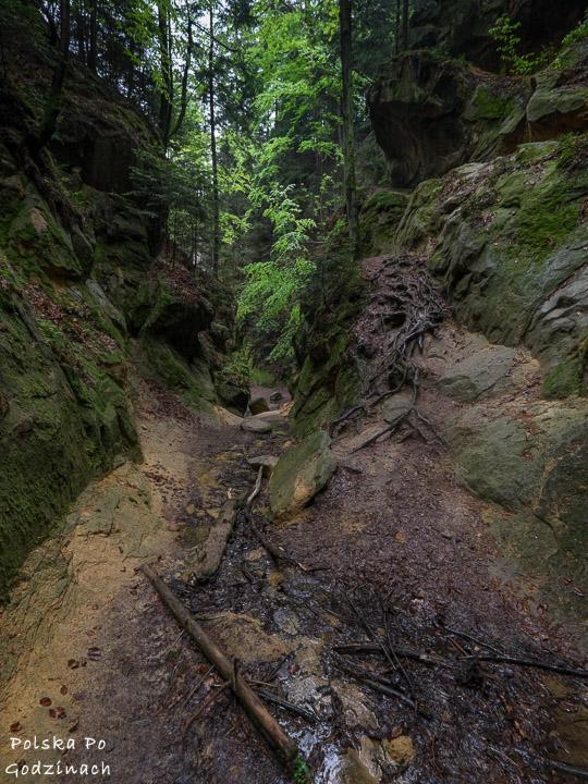 Wysokie ściany Wąwózu Ciężkowickiego przy Wodospadzie Czarownic