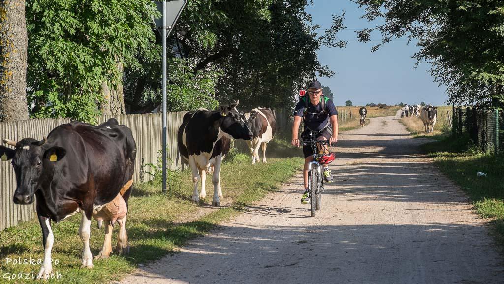 Green Velo przez Podlasie. Najpiękniejszy szlak rowerowy w Polsce.