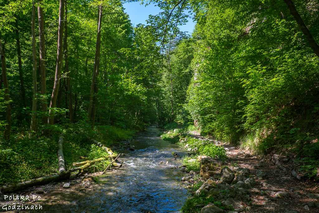 Potok Racławki płynący przez las