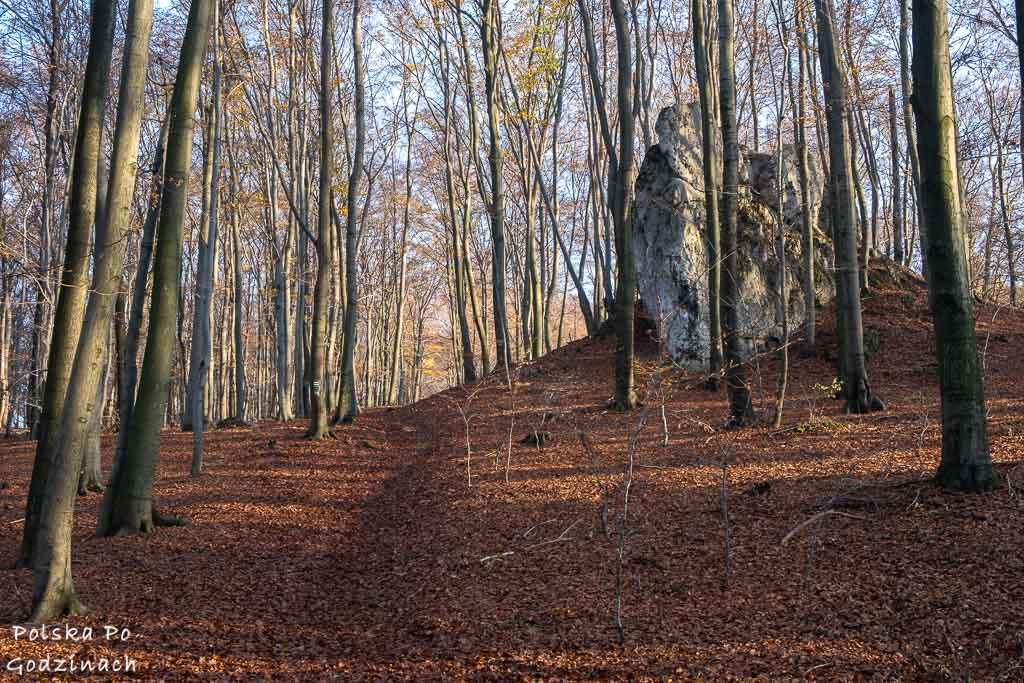szlak przez Rezerwat Pazurek koło Olkusza