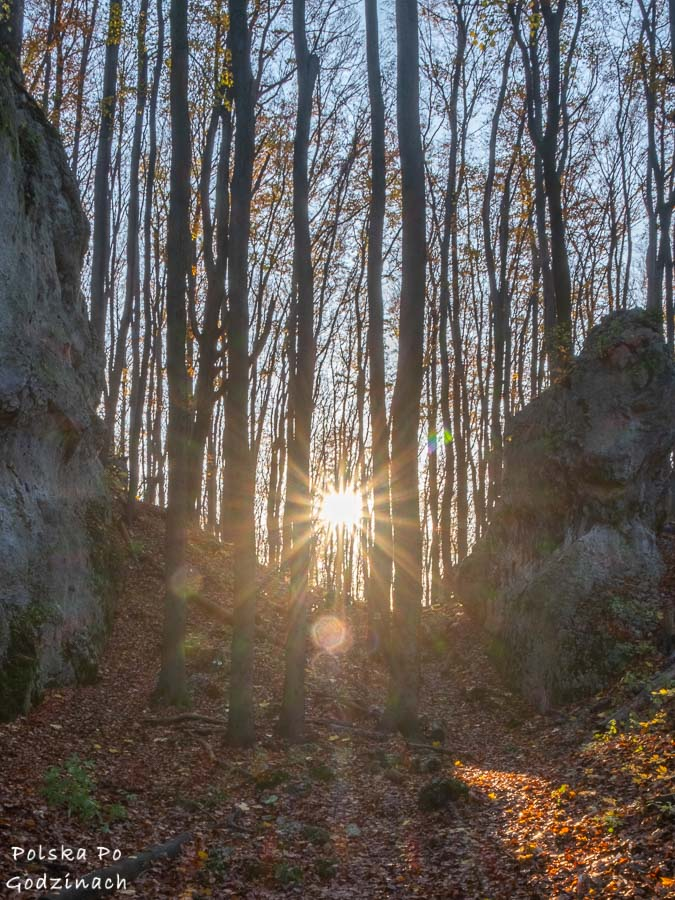 promienie słońca przebijają się wśród drzew i wapiennych ostańców