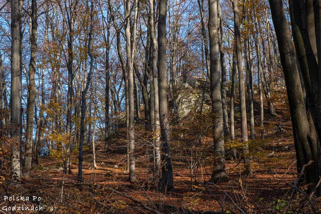 wapienne skałki na terenie rezerwatu przyrody