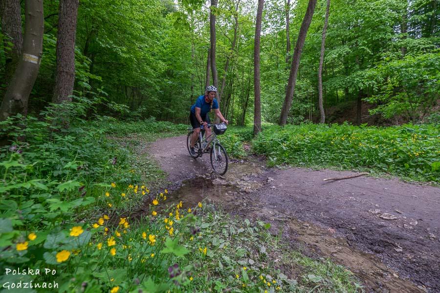 rower w Dolinie Kobylańskiej