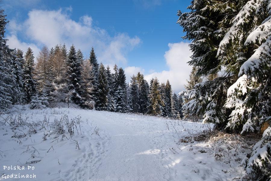 Szlak górski na Ćwilin zimą wśród drzew.