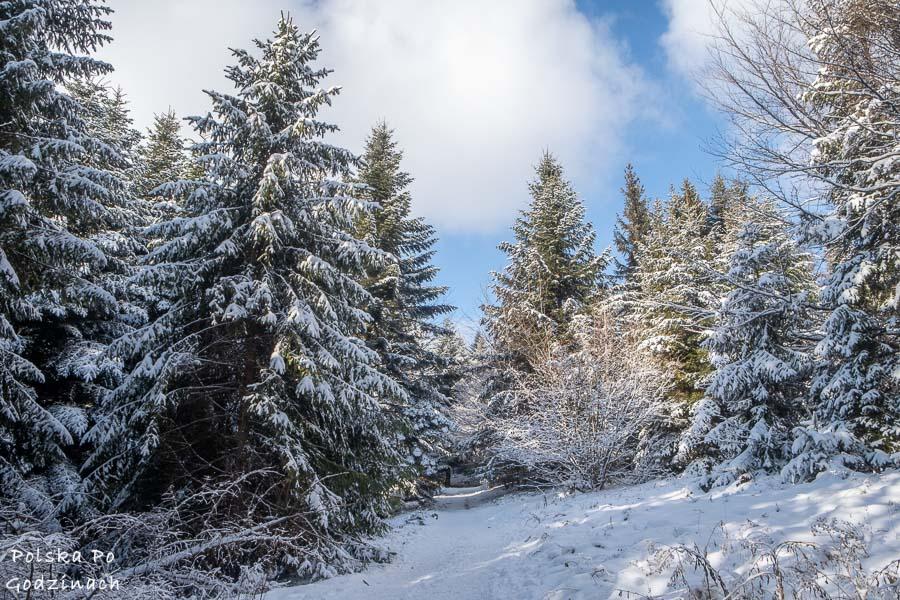 Szlak na Ćwilin pokryty śniegiem.
