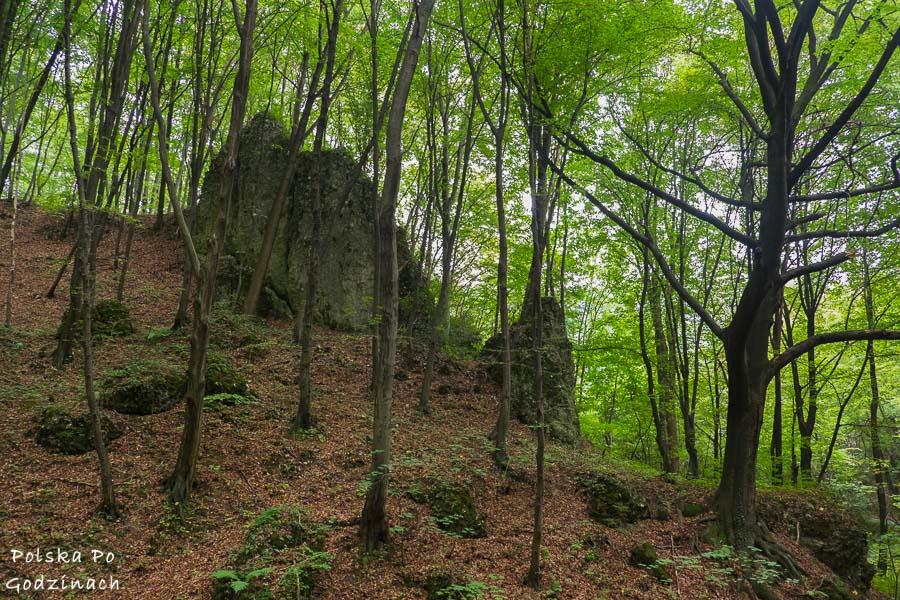 Dolina Będkowska - buczynowy las i wapienne skałki