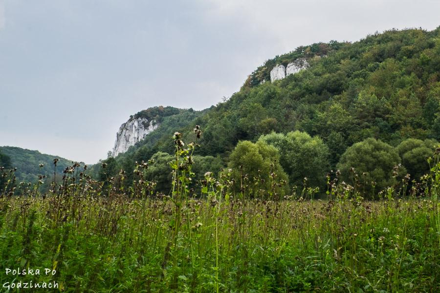 Wysoka, wapienna skała zwana Sokolicą w Dolinie Będkowskiej